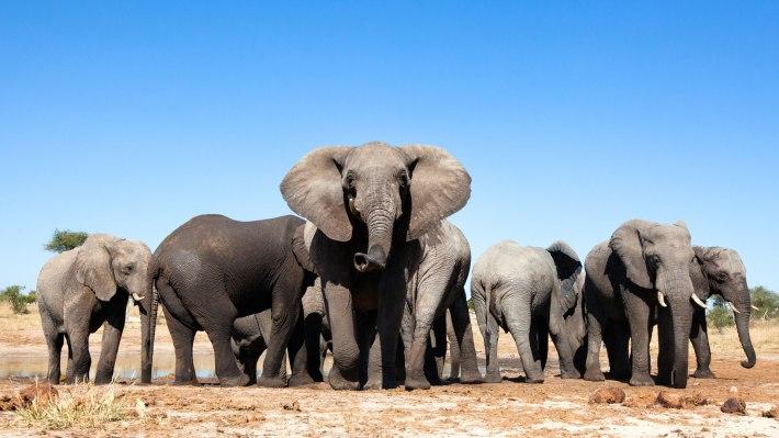 chad-elephants-3
